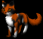 Warrior Cats Rollenspiel