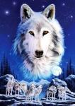 """So Hallo erstmal. Wie ihr oben schon lesen könnt geht es um die Bücherreihe """"der Clan der Wölfe"""". Es gibt 5 Bücher davon (Stand 23.09.20"""