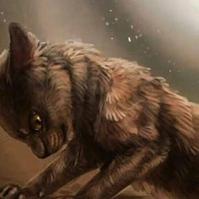 Wurzellicht Warrior Cats