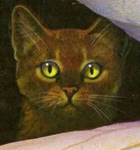 Warrior Cats Schneepelz Tod
