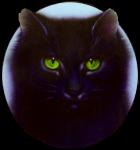 Warrior Cats. Fakten über... Distelblatt