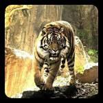 Ach ja, noch ein paar Infos: -Ich will hier keine wunderschönen, muskulösen, total attraktiven Tiger haben, okay? -im Rollenspiel könnt ihr euch au