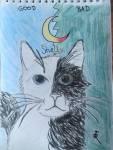 Warrior Cats - Halbmond