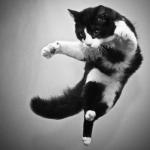 Achtung Katze fliegt tief! xD Seele im Angriff!