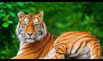 ((bold))Katzenartige Namen: ((ebold)) Leoparden- Schneeleoparden- Puma- Geparden- Luchs- Rotluchs- Jaguar- Tiger- Löwen- Nebelparder- Serval- Margay-