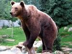 ((bold))Bärenartige Namen: ((ebold)) ((red)) ACHTUNG! ((cur)) Was manchmal nicht so gerne in den typischen WaldClans gesehen wird, sind zB. Namen wie