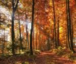 """((cur)) Der Wald ((ecur)) Der Wald ist sozusagen die """"Arena""""."""