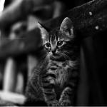 Er richtet sich auf. Das Licht im Schülerbau reicht aus, um die anderen schlafenden Katzen zu identifizieren. Er schnippt mit den Ohren, kann nicht l