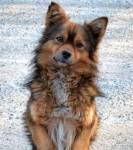 Von welchem Tier stammt der Hund ab?
