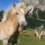 Wie oft bist du in der Woche bei deinem Pferd?