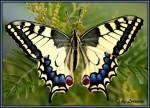 Hast du große oder kleine Flügel?