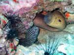 Jetzt wird es schwieriger: Gehört die Zebramoräne zu den Aalen?
