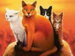 Warrior Cats Band 6 Stunde der Finsternis - Quiz