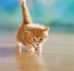 DEIN Name in Warrior Cats