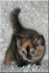 Mit deiner Lieblingsfarbe gibst du deiner Katze eine Gabe ;) Grün - In Gedanken und Träume eintauchen und diese Steuern Gelb - Unbesiegbar im Kampf