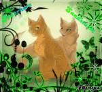 Warrior Cats - Pairings der Woche