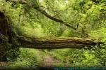REGENCLAN Leopardensturm hechtete durch den Wald, mit einem Tempo, dass jeden Hasen für Neid erblassen ließ. Sie selbst jedoch war weniger berauscht