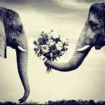 Ist ihr Lieblingstier ein Elefant?