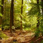 Dort, im Wald, liegt das Territorium des Waldclans. Die Krieger des Waldclans können gut klettern. Sie sehen sehr elegant aus, wenn sie wie Eichhörn
