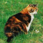 BRÄUCHE UND SITTEN 1. Jede Katze muss die andere Ehren. 2. Junge müssen mindestens einmal ihre Fellfarbe gewechselt haben bevor sie Schüler werden.