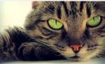 Gezeiten Clan.... ANFÜHRER: FEDERSTERN (w): schildpattfarben. Grüne Augen./schwarzes Fell. Grüne Augen ZWEITER ANFÜHRER: TAUSCHWEIF (w): graues Fe