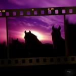 Pferde in einem schönen Licht als Filmausschnitt