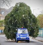 Viele Weihnachtsbäume stehen in Schweizer Wohnzimmern. Aber kaum einer weiss, woher der Brauch kommt. Weisst du es?