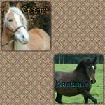 Hierarchie: Leitstute: Name: Creamy Rasse: Edelbluthaflinger Aussehen: Schlank, recht heller Haflinger mit langer weißer Mähne und schöner breiter
