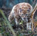 Warrior Cats dein Name