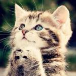 So sieht die Katze von Finn aus: Name: Der Stecki: Name: Tiramisu Alter: 3 Jahre Geschlecht: w Aussehen: cremefarbenes, langes Fell mit blauen Augen K