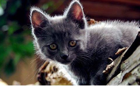 Warrior Cats Schmal