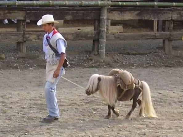 Das Kleinste Pferd Der Welt