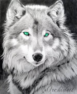 Dein Leben Als Wolf Quimensch