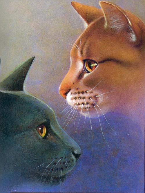 Warrior Cats Feuerherz Und Graustreif