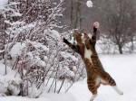 ((bold))EISCLAN ((ebold)) Geschmeidige, starke Katzen, mit dichtem Fell, gute Schwimmer und Ausdauerläufer, mögen die Blattleere ((cur))((unli))Terr