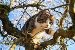 ((bold))GEWITTERCLAN((ebold)) Muskulöse, mittelgroße Katzen, gute Springer und Kletterer ((cur))((unli))Territorium:((eunli))((ecur)) Laubwald mit v