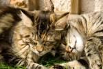 ((bold))Der SternenClan((ebold)) Salamanderschweif - schlanke, schwarze Kätzin mit weiß-cremefarbenen Flecken, kurzem Fell und orangenen Augen; ((cu