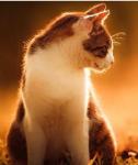 Hallo. ;) Ich warne dich, die Welt der Warrior Cats ist gefährlich!