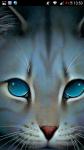 Warrior Cats die 10 Katzen mit den größten Schmerzen