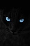 Warrior Cats - Falsches Gesicht