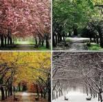7. Welche Jahreszeit bevorzugst du?