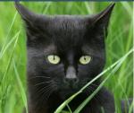 Warrior cats - Zu welchem Clan gehörst du?