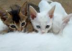 """""""Wir sind Echopfote und Seelenpfote."""" Miaut der weiße, der offenbar Echopfote heißt und neigt seinen Kopf. Seelenpfote hingegen mustert di"""