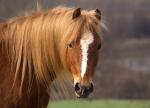 Wie gut kennst du dich mit Pferden aus?