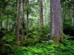 Hier ist das Territorium des Wald Clans etwas tiefer und gut versteckt liegt ihr Lager sie jagen Mäuse, Vögel zwischendurch auch mal Hasen .