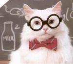 Mentoren-Schüler: Barbiepuppe-Eispfote Dinoschweif - Youtubepfote