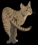 Tigerkralle ist dunkel/hellbraun getigert.