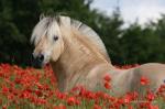 Bis zu welcher Größe spricht man von einen Pony?