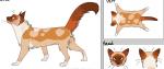 ((bold)) Die coolste Katze – Aussehensguide ((ebold)) » Es gibt immer jemanden, der noch keine perfekten Aussehensbeschreibungen erstellen kann. Ic