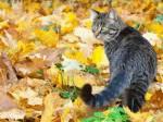 ((bold))Hierarchie HerbstClan((ebold)) Anführerin: ((bold))Amselstern((ebold)) - schwarze Kätzin mit silbernen Augen und einem weißen Stern auf der